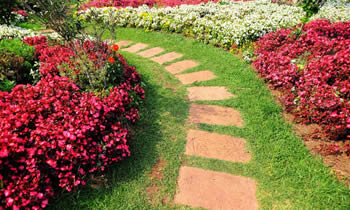 Landscaping in San Antonio STATE% Landscaping Services in  San Antonio STATE% Landscapers in  San Antonio STATE%